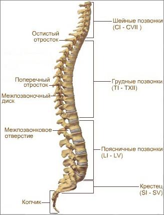 Йога для лечения остеохондроза шейного отдела
